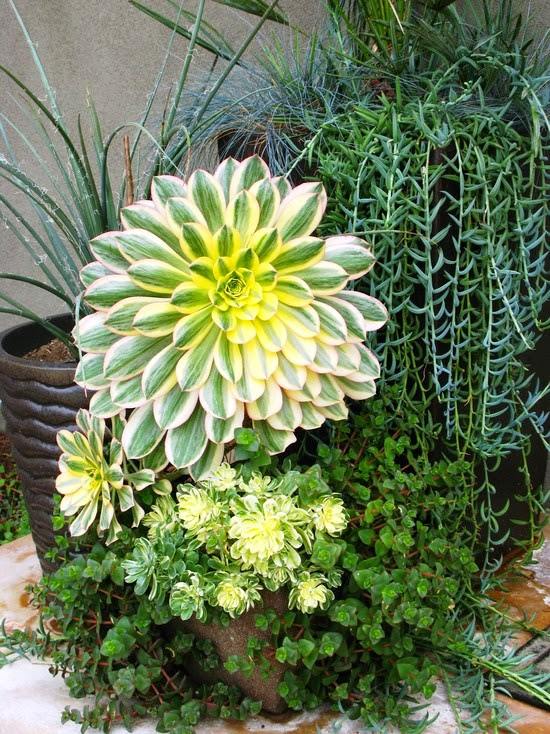 Debora Carl Landscape Design (San Diego)