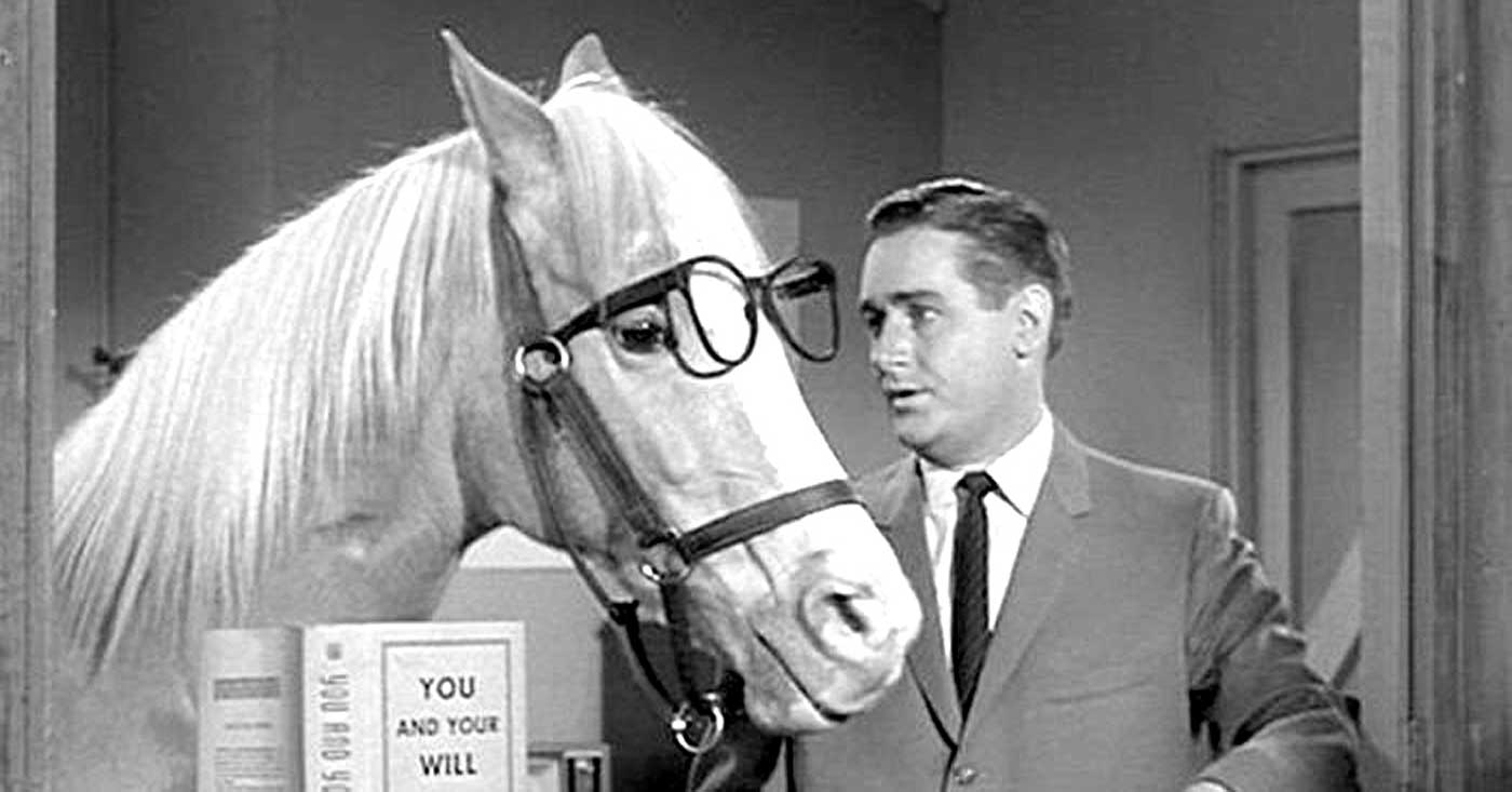 Image result for Mr Ed the talking horse the Norwegian way