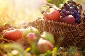 fruits et légumes de la ferme dans l'Ariége, des vrais plaisirs gourmands