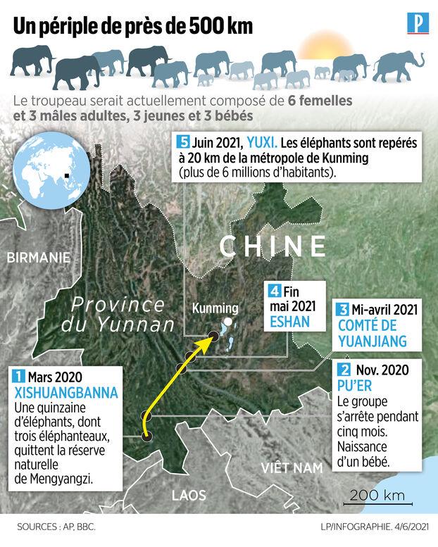 Un troupeau d'éléphants sème la panique en Chine :