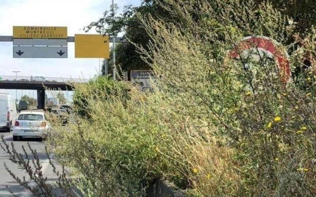 Autoroute A3, à hauteur de Romainville. Les panneaux avertissant de l'abaissement de la vitesse à 50 km/h sur la bretelle de l'A3 étaient invisibles du fait de la végétation.