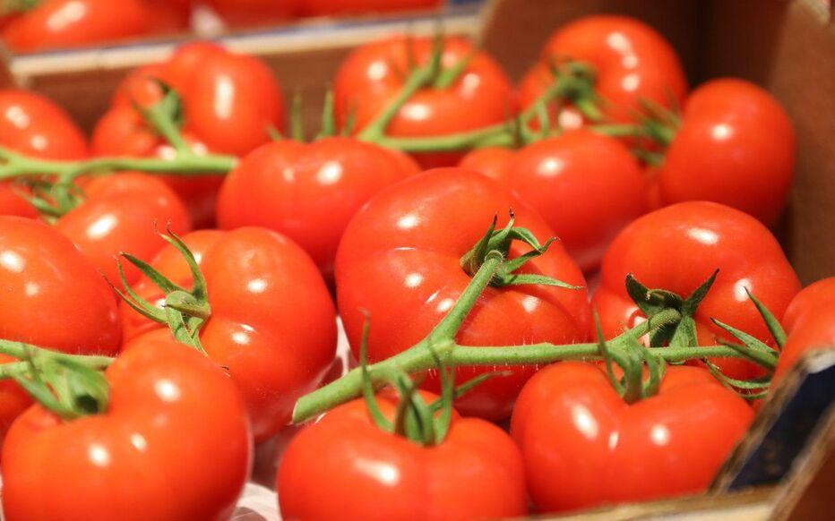 Virus de la tomate : cinq questions sur le ToBRFV, désormais sur le sol français - Le Parisien