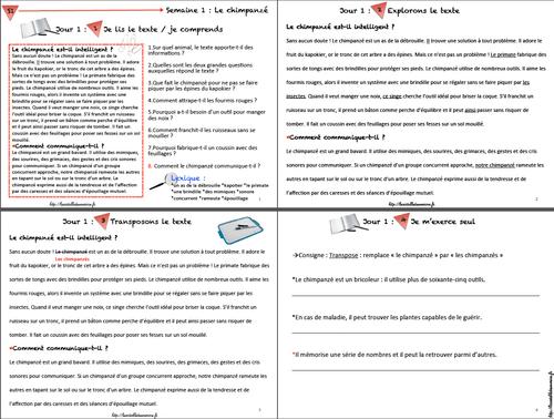 Fichier vidéoprojetable grammaire Picot CE2/CM1