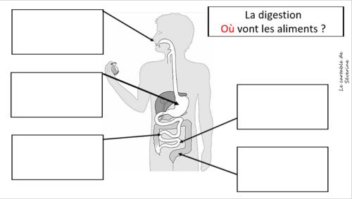 Carte mentale  : la digestion