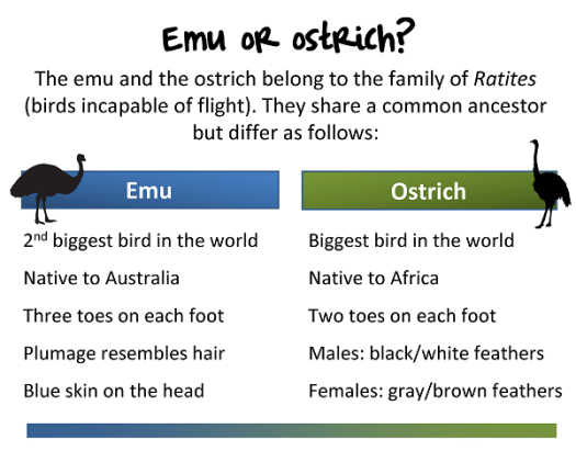 Differences between an emu and an ostrich