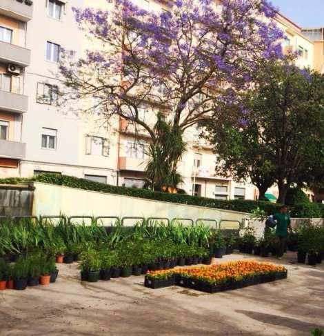 Mettete dei fiori nei vostri balconi- Ortensia - Le Plume