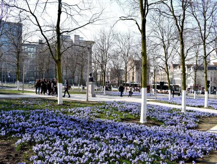 prima volta a Bruxelles bruxelles fiorita - fumetti - le plume