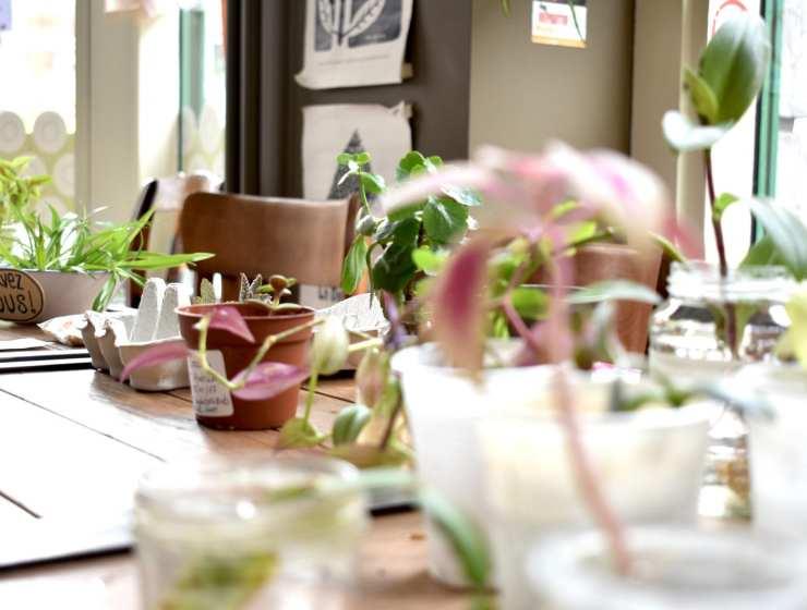 Plant Swap - Seeds Brussels - Le Plume Dettagli vasi