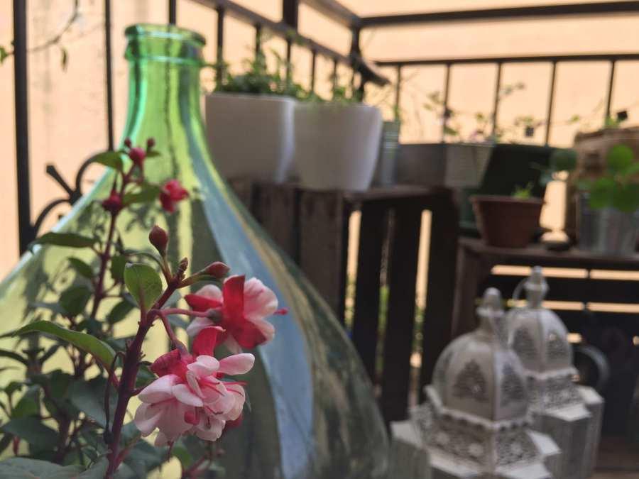 Fuchsia - balcone -LePlume