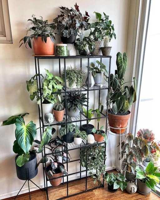 3 Indoor garden - Le Plume