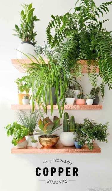 colori tenui - indoor garden - Le plume