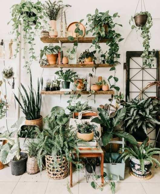 jungle room 2 Indoor garden - Le Plume