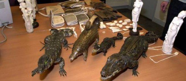 En janvier 2014, de la maroquinerie en crocodile avait été trouvée dans les locaux d'un célèbre hôtel de ventes aux enchères parisien.