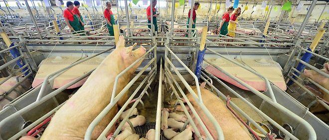 Le prix actuel du porc s'établit à environ 1,40 euro le kilo, objectif fixé par le gouvernement à partir du 12 juin pour tenter de résoudre la crise traversée par les éleveurs de porcs français.