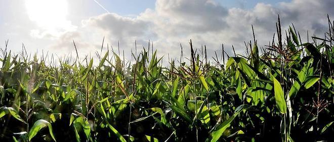 L'agricullteur avait été intoxiqué en inhalant des vapeurs de Lasso sur ses cultures de maïs. La condamnation du groupe américain est une première.