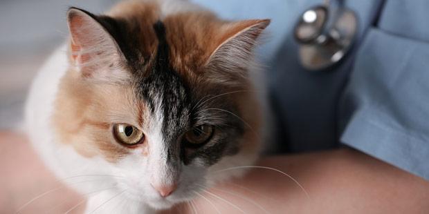 Les Cliniques Invites Rejoindre Le Cat Friendly