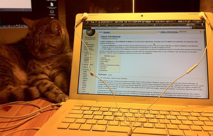 Mon chat, Zuli, médite, la patte connectée mon ordi.