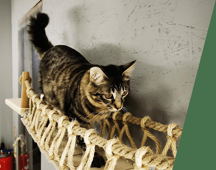 pont pour chat parcours mural design