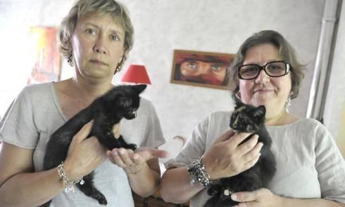 Marie-Christine Herbert et Béatrice Gache craquent pour leurs petits chatons. - photos brigitte azzopard