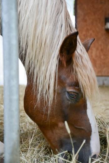 Georgenhammer Pferd