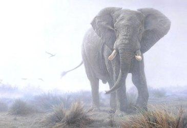 Éléphant symbolique de cet animal totem