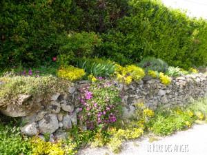 Flore en Ardèche
