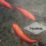Fripouilleries autour des poissons