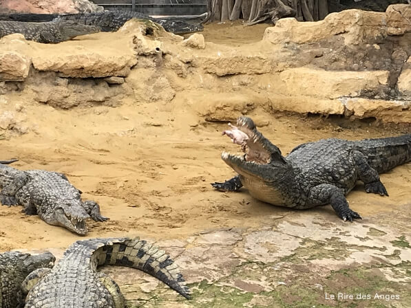 ferme crocodiles