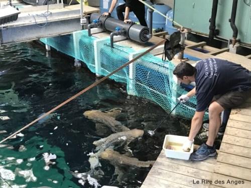nourrissage requin aquarium lyon