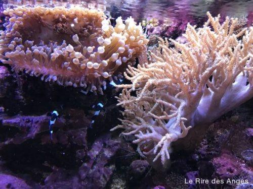 coraux de l'aquarium de Lyon