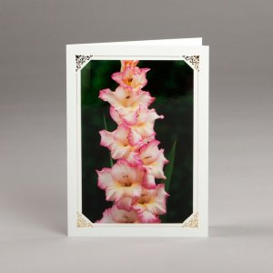 card with assorted photos-gladiola