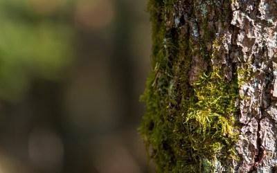 La commune de Bassins veut céder son chauffage bois