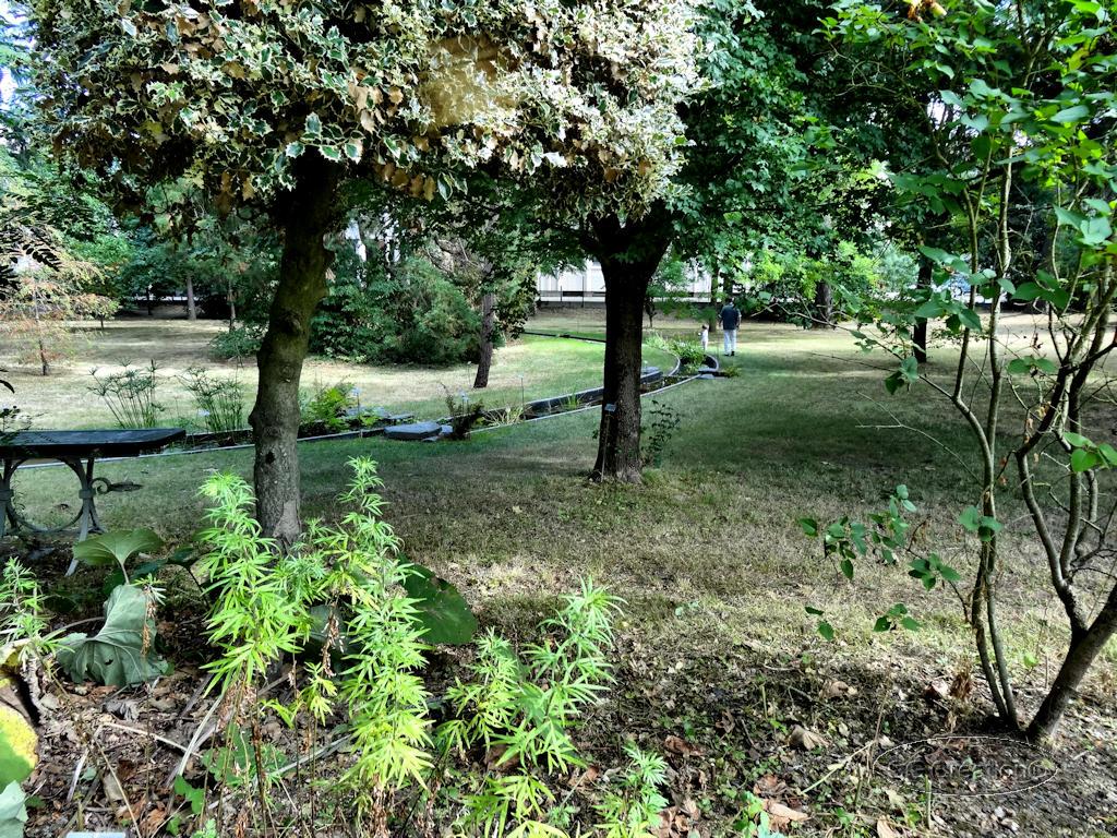 Patrimoine jardin fac de pharmacie suite 4 4 des mauges en anjou fr - Pharmacie du jardin des plantes ...