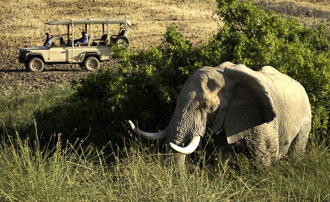 Desert Rhino Camp Les Plus Beaux Lodges