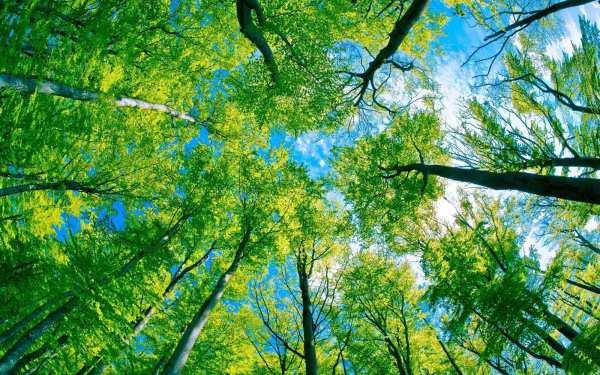 Le langage des arbres