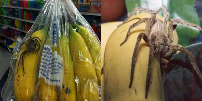 Cuisson sous vide de tarentule aromatisée banane