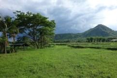 La plaine rizicole de Mae Tha