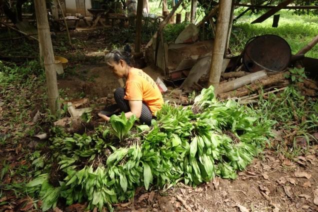 Préparation de la Plantation de fleurs comestible en système agroforestier