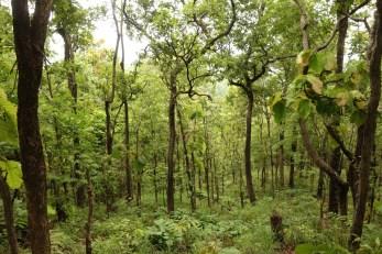 La forêt de Mae Tha reprend lentement ses droits