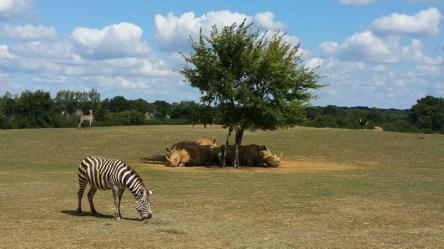 Zébres et Rhinocéros - Zoo de la boissiere du dore