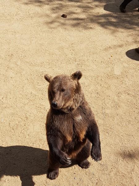 Ours - Zoo de la boissiere du doré