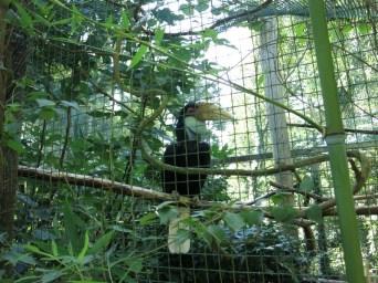 Calao - Zoo de la boissiere du doré