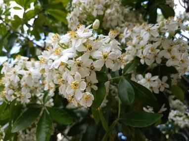 fleurs de Conques