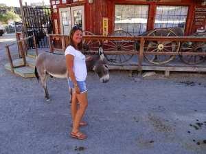 Les ânes de Oatman