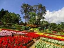 Mae Fah Luang Garden (les Jardins royaux)