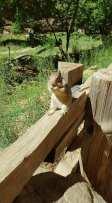 Un écureuil à Zion park