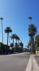 allée de palmiers à Beverly Hills