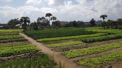 Village d'herbes - Hoi An