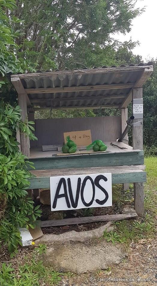 Avocats sur la route en Australie