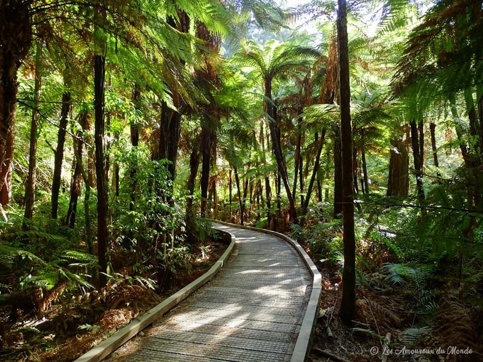Forêt de Redwood Rotorua Nouvelle-Zélande